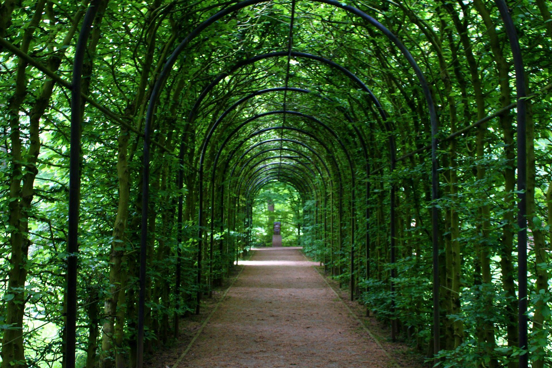 pasaje, 通道, 隧道, 道路, 植被, 树木 - 高清壁纸 - 教授-falken.com