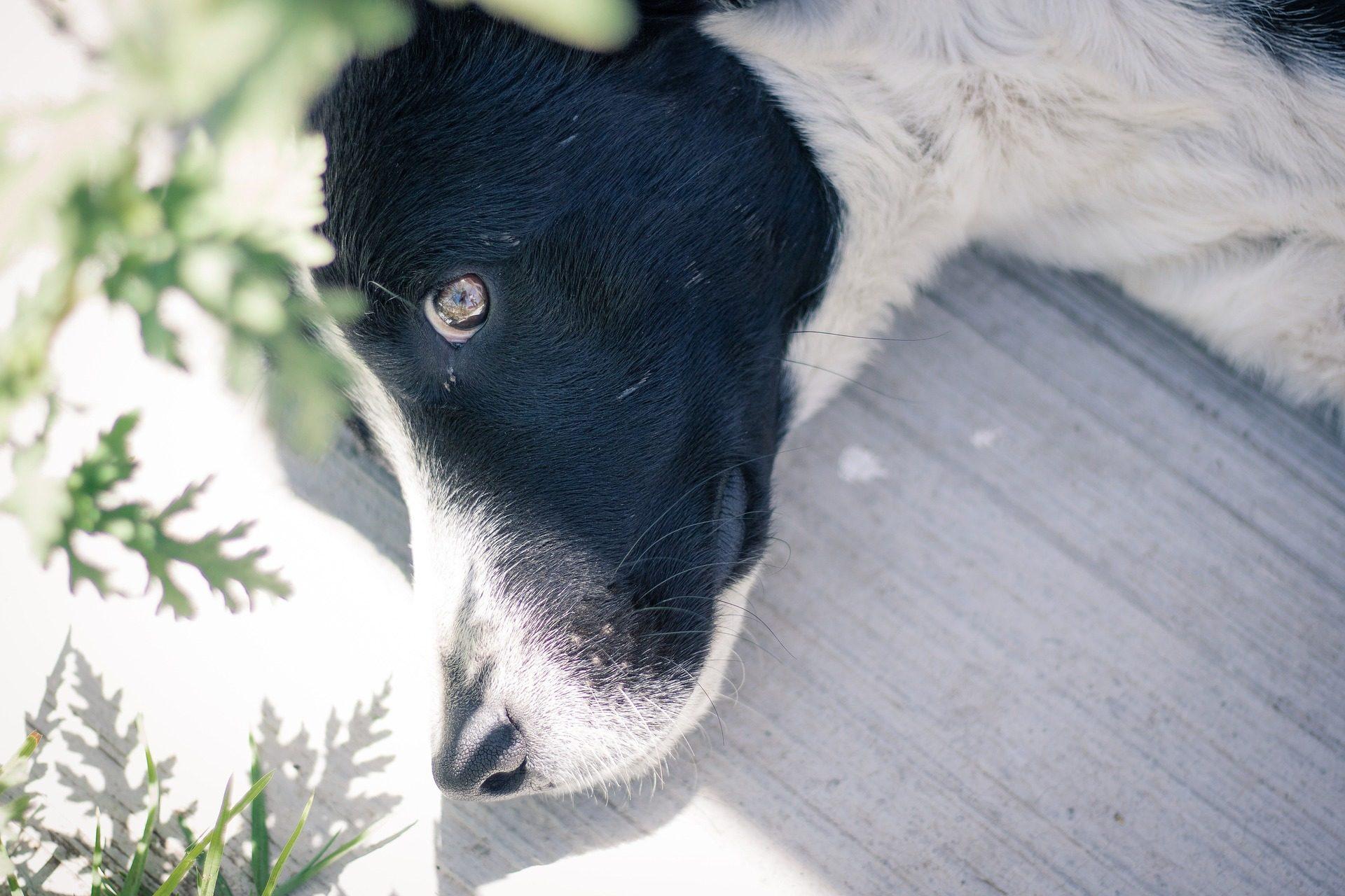 chien, Animal de compagnie, ami (e), reste, se détendre, coup d'oeil - Fonds d'écran HD - Professor-falken.com