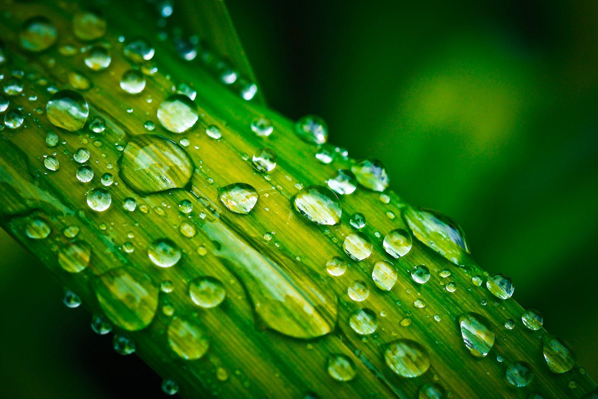 ισόγειο, φύλλο, σταγόνες, Rocio, νερό, βροχή - Wallpapers HD - Professor-falken.com