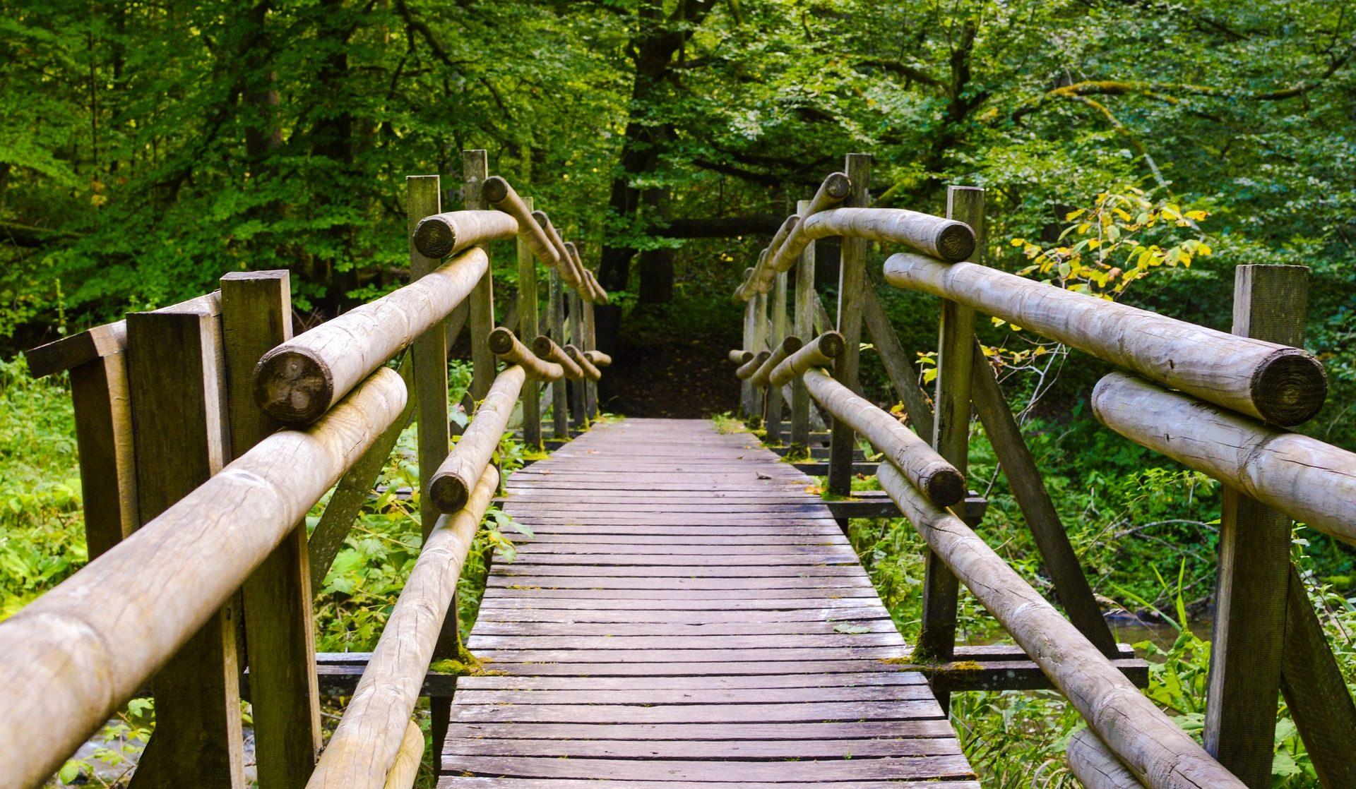 جسر, الخشب, ألواح خشبية, الغابات, الأشجار, الغطاء النباتي - خلفيات عالية الدقة - أستاذ falken.com