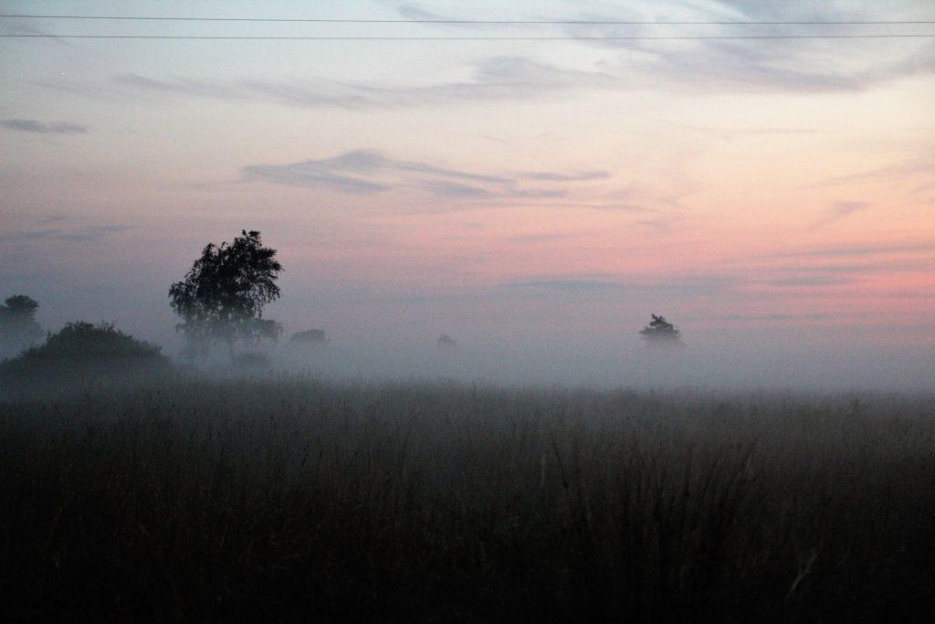 山谷, 平原, 字段, 树木, 雾, 黎明, 1804250823