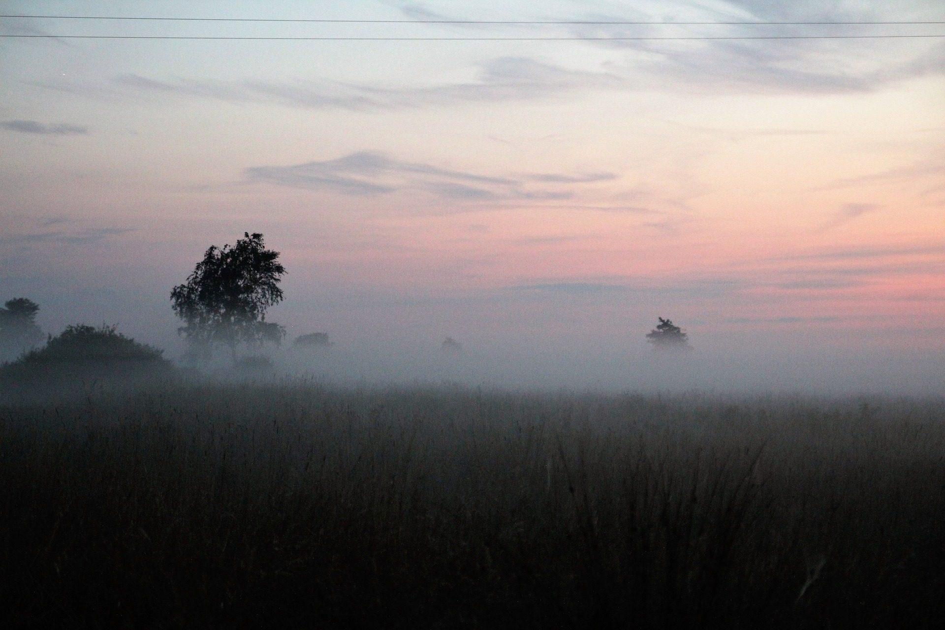 Vale, sem formatação, campo, árvores, nevoeiro, amanhecer - Papéis de parede HD - Professor-falken.com
