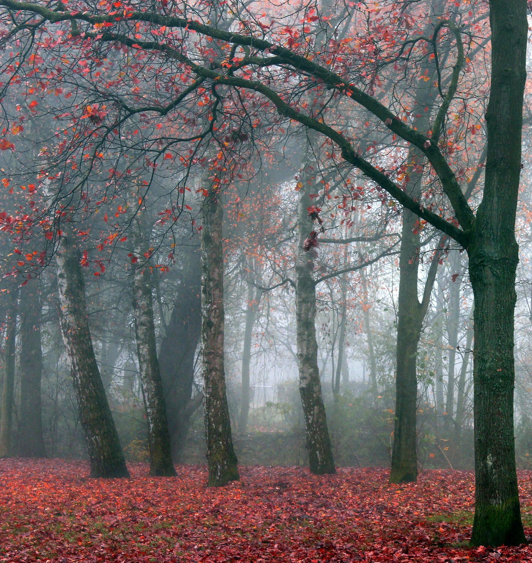 лес, деревья, туман, листья, Опавшие листья, Рассвет - Обои HD - Профессор falken.com