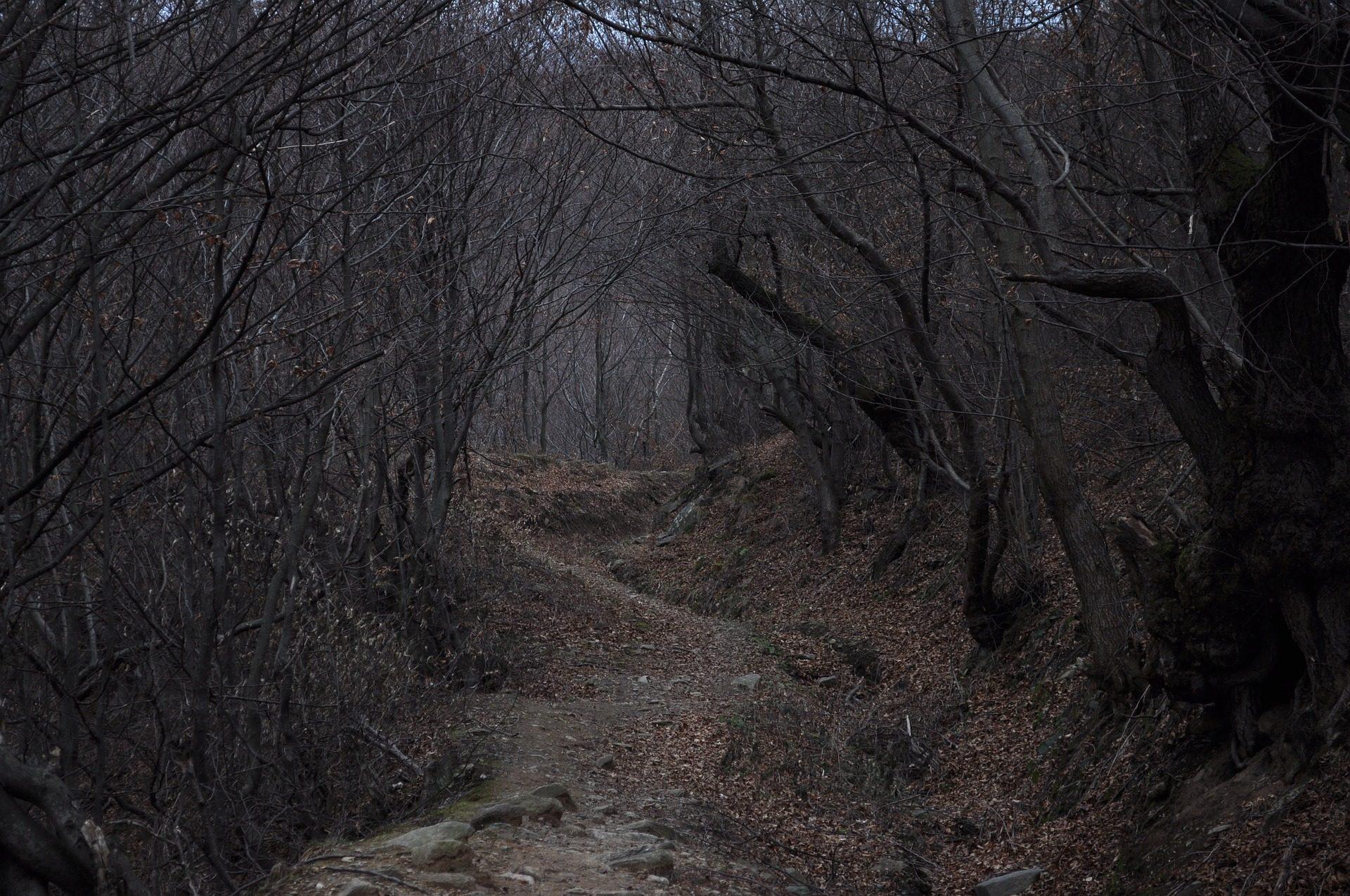 Estrada, floresta, Escuro, árvores, medo - Papéis de parede HD - Professor-falken.com