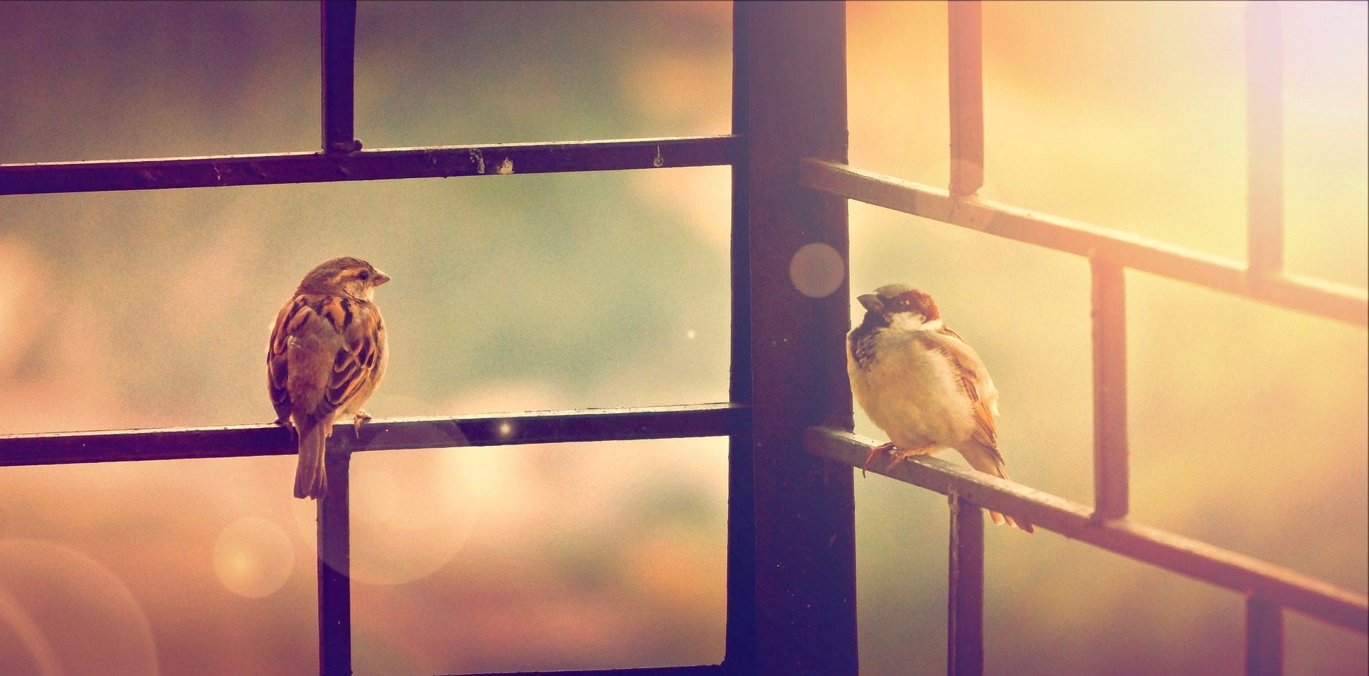 スズメ, pájaros, 鳥, バー, キュー - HD の壁紙 - 教授-falken.com