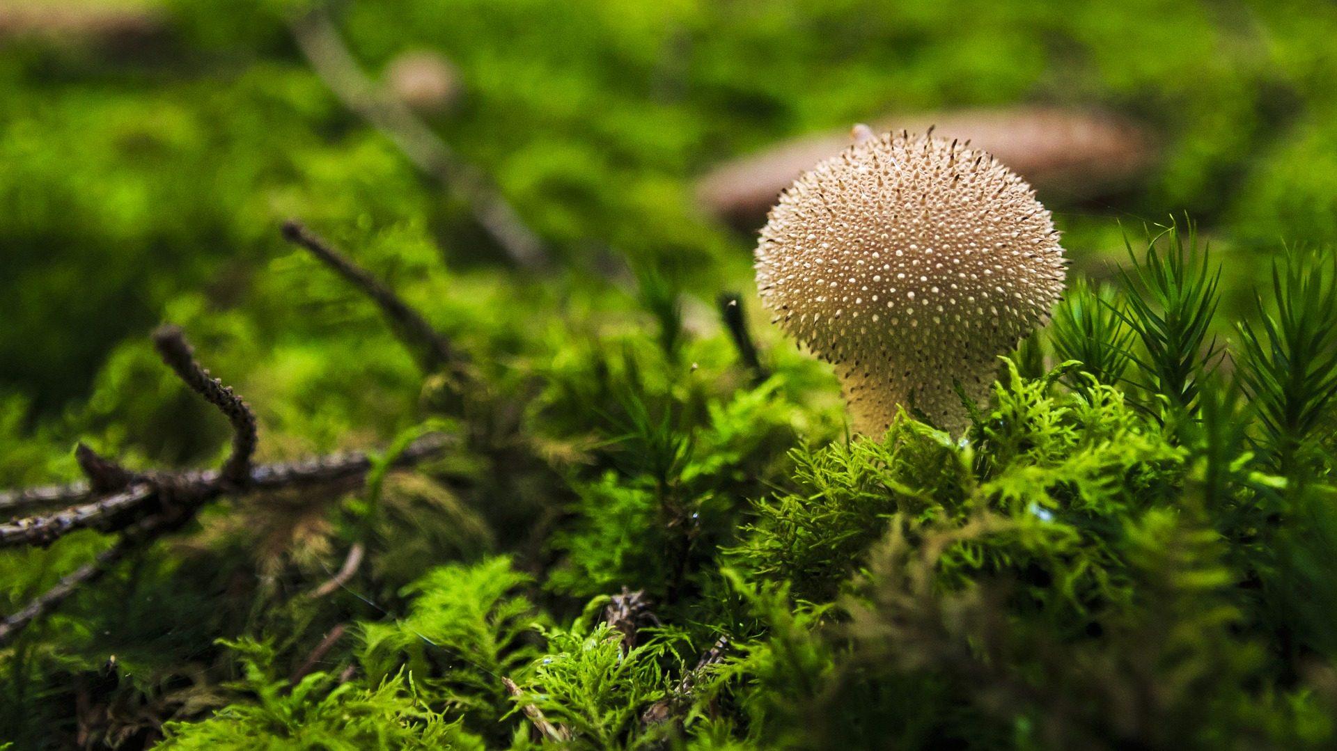Hongo, Seth, foresta, umidità, piante - Sfondi HD - Professor-falken.com