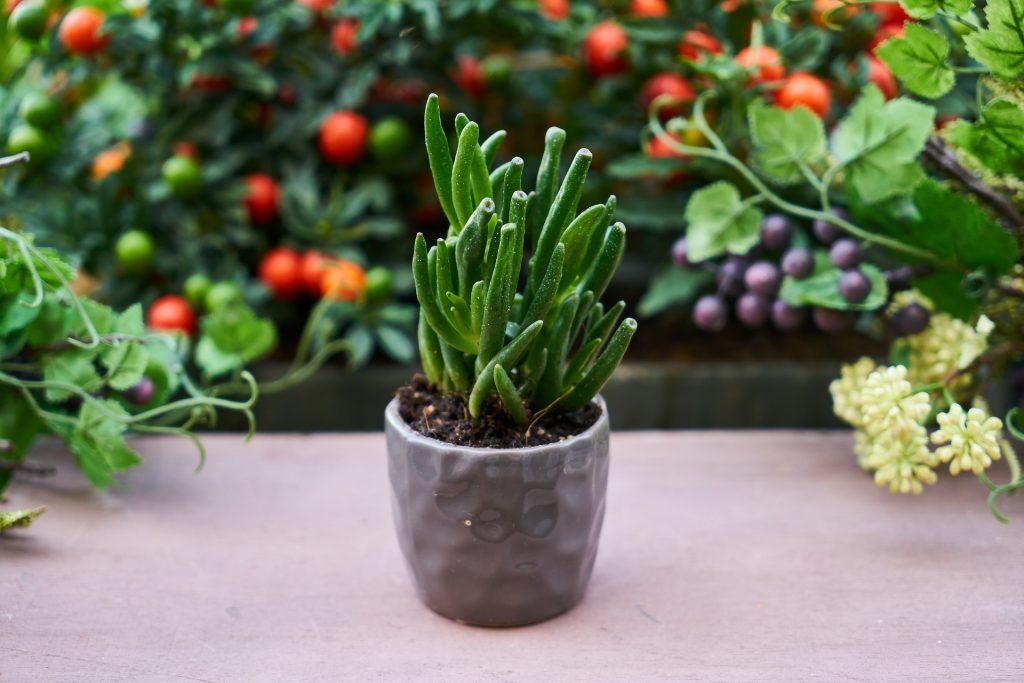 maceta, plantas, frutos, flores, jardín, 1805210811
