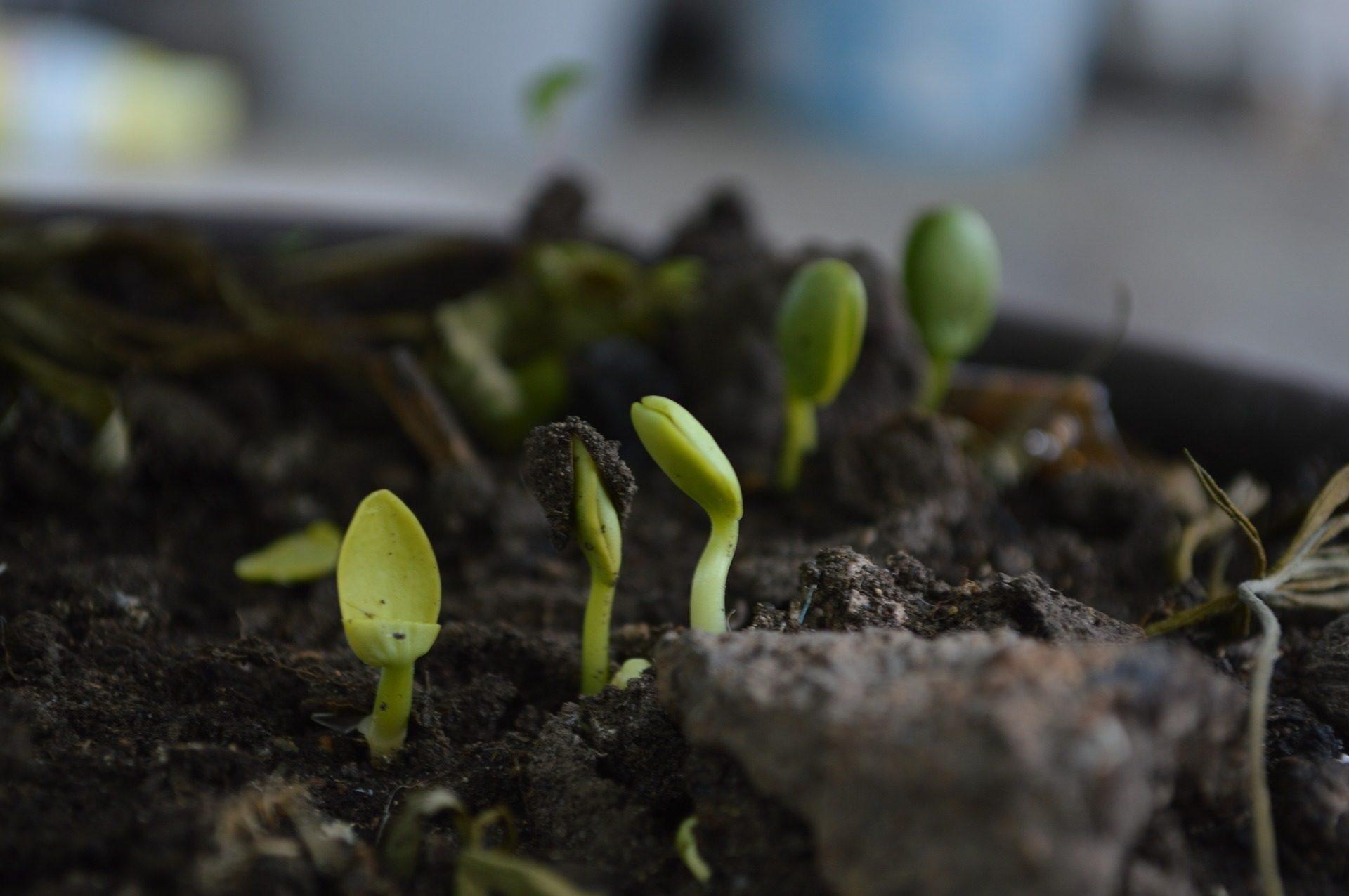 النباتات, تفشي, الحياة, الأرض, الأسمدة - خلفيات عالية الدقة - أستاذ falken.com